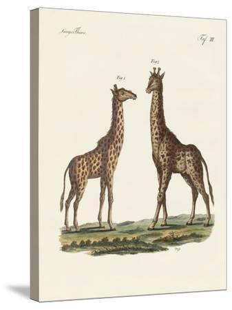 Four-Footed Animals--Stretched Canvas Print