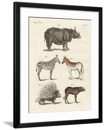 Four-Footed Animals--Framed Giclee Print