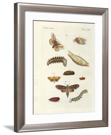 Harmful Butterflies--Framed Giclee Print