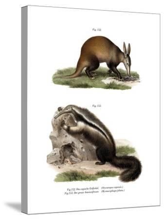 Aardvark, 1860--Stretched Canvas Print