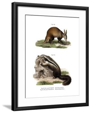 Aardvark, 1860--Framed Giclee Print