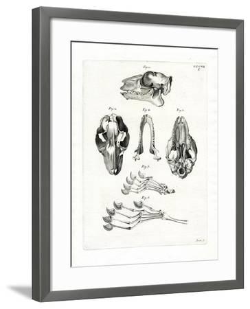 Flying Lemur Skull--Framed Giclee Print