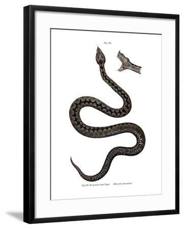 Nose-Horned Viper--Framed Giclee Print