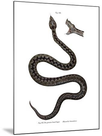 Nose-Horned Viper--Mounted Giclee Print