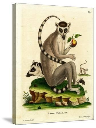 Ring-Tailed Lemur--Stretched Canvas Print