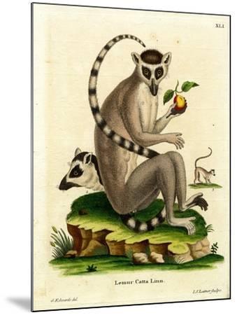 Ring-Tailed Lemur--Mounted Giclee Print