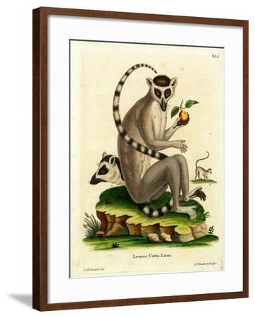 Ring-Tailed Lemur--Framed Giclee Print