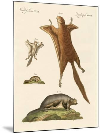 Flying Squirrels--Mounted Giclee Print
