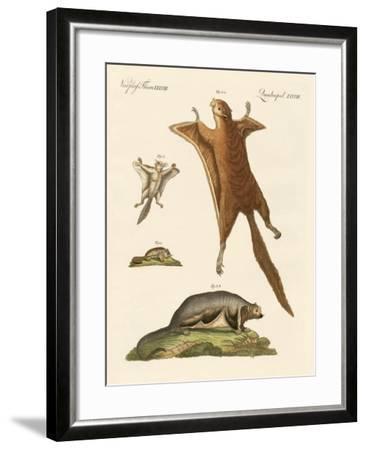 Flying Squirrels--Framed Giclee Print