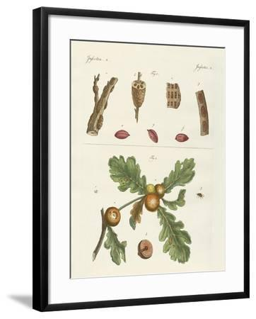 Useful Insects--Framed Giclee Print