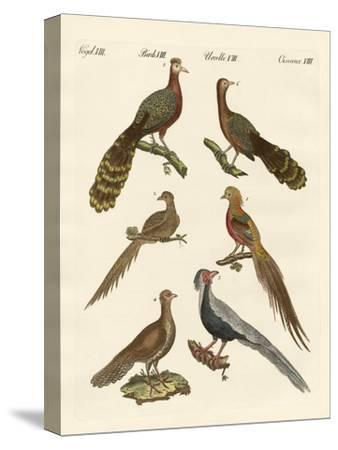 Chinese Birds--Stretched Canvas Print