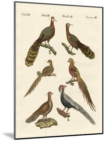Chinese Birds--Mounted Giclee Print