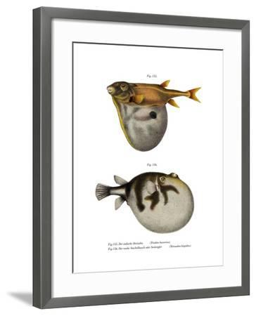 Threetooth Puffer--Framed Giclee Print