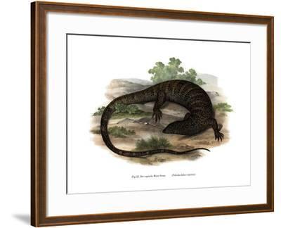 Monitor Lizard--Framed Giclee Print