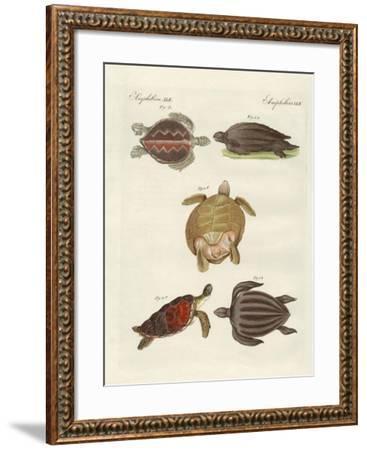 Strange Sea-Turtles--Framed Giclee Print