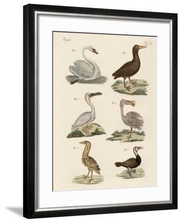 Strange Water Birds--Framed Giclee Print