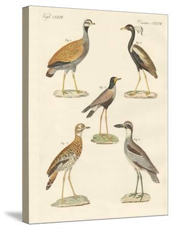 New Ratite Birds--Stretched Canvas Print