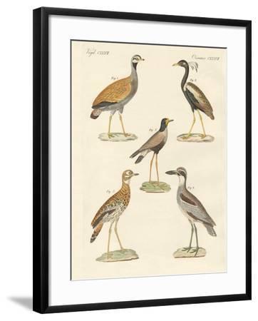 New Ratite Birds--Framed Giclee Print