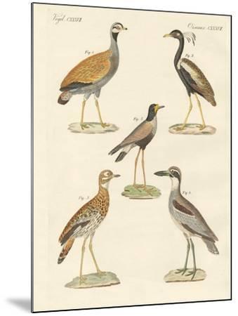 New Ratite Birds--Mounted Giclee Print