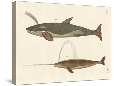 Two Kinds of Whales--Stretched Canvas Print