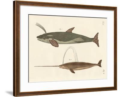 Two Kinds of Whales--Framed Giclee Print