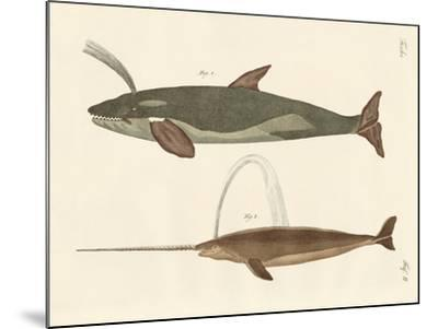 Two Kinds of Whales--Mounted Giclee Print