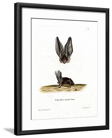 Grey Long-Eared Bat--Framed Giclee Print