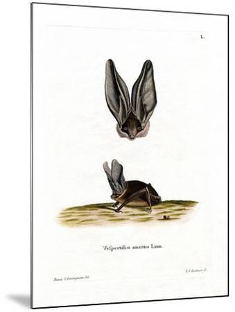 Grey Long-Eared Bat--Mounted Giclee Print