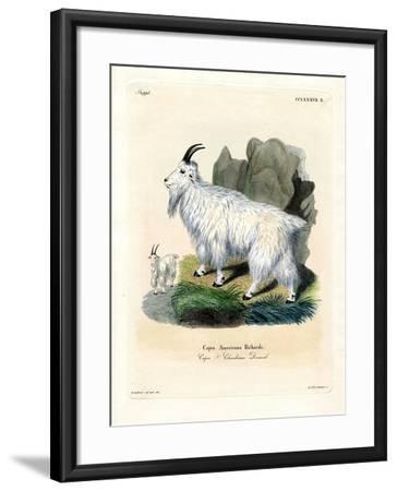 Rocky Mountain Goat--Framed Giclee Print
