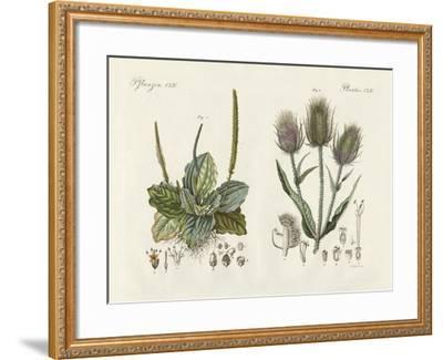 Outstanding Plants--Framed Giclee Print