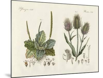 Outstanding Plants--Mounted Giclee Print