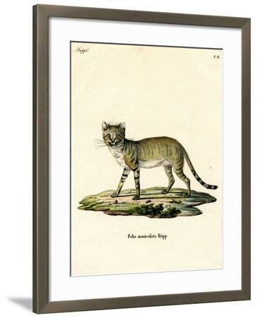 African Wild Cat--Framed Giclee Print