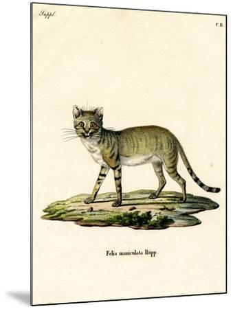 African Wild Cat--Mounted Giclee Print