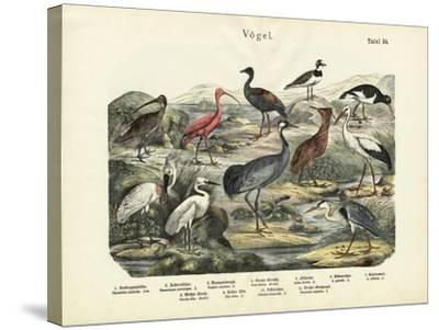 Birds, C.1860--Stretched Canvas Print
