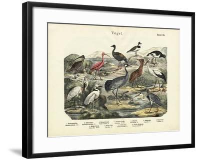 Birds, C.1860--Framed Giclee Print
