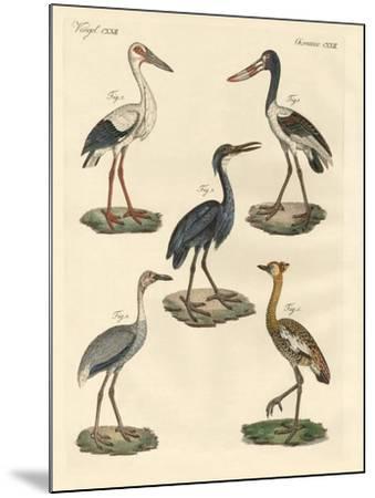 Strange Birds--Mounted Giclee Print