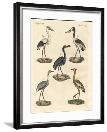 Strange Birds--Framed Giclee Print