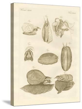 Strange Sea-Snails--Stretched Canvas Print