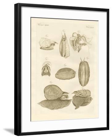 Strange Sea-Snails--Framed Giclee Print