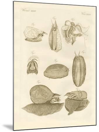 Strange Sea-Snails--Mounted Giclee Print