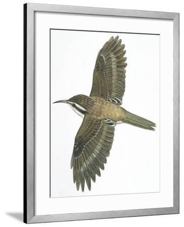 Birds: Passeriformes, Common Treecreeper (Certhia Familiaris)--Framed Giclee Print
