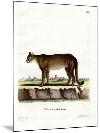 Cougar--Mounted Giclee Print