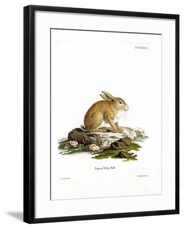 Tolai Hare--Framed Giclee Print