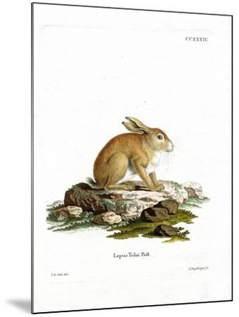 Tolai Hare--Mounted Giclee Print