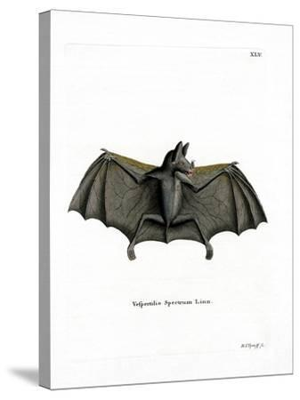 Spectral Bat--Stretched Canvas Print