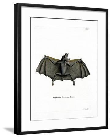 Spectral Bat--Framed Giclee Print