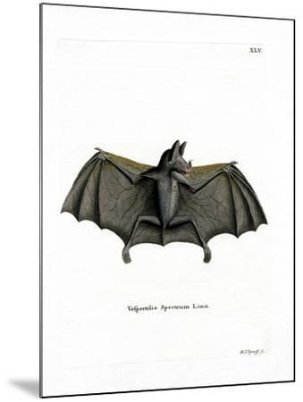 Spectral Bat--Mounted Giclee Print