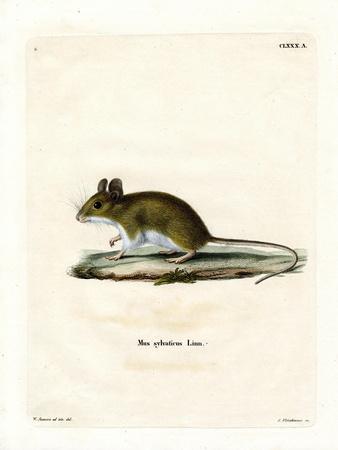 Wood Mouse--Framed Giclee Print