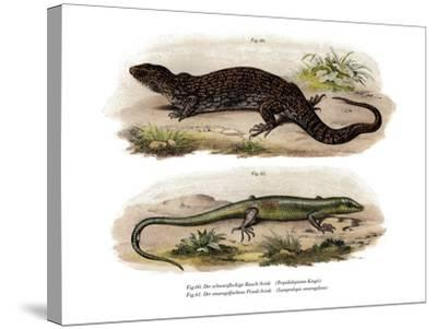 Tree Skink--Stretched Canvas Print