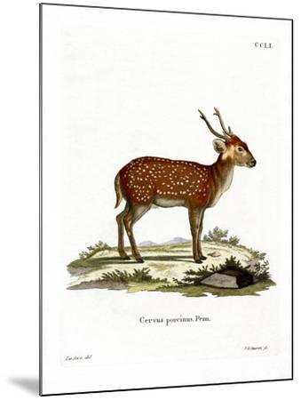 Hog Deer--Mounted Giclee Print